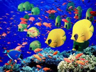 Собирать пазл The fish on the reef онлайн