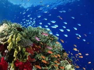 Собирать пазл reef онлайн