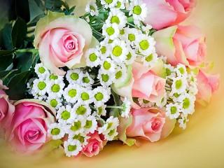 Собирать пазл Rose and chamomile онлайн