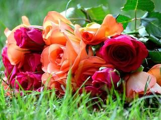 Собирать пазл Roses on the grass онлайн