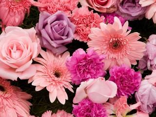 Собирать пазл Pink and purple онлайн