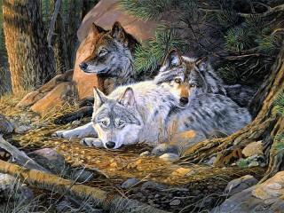 Собирать пазл Family of wolves онлайн