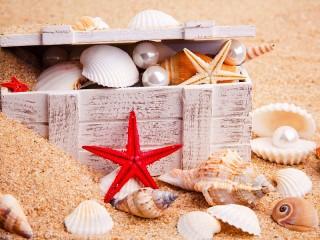 Собирать пазл Treasures from the sea онлайн
