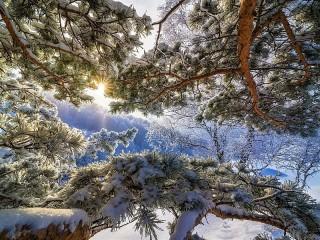 Собирать пазл Sun and snow онлайн
