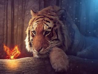 Собирать пазл Tiger and butterfly онлайн