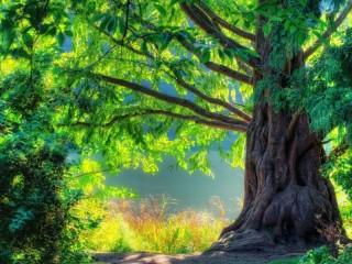 Собирать пазл Tree онлайн