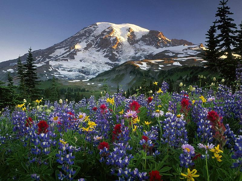 Rompecabezas Recoger rompecabezas en línea - Altai flowers