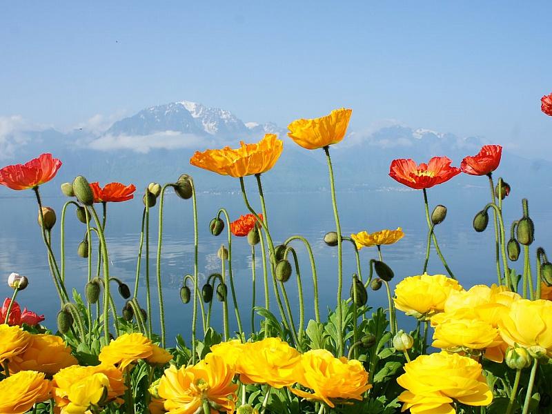Rompecabezas Recoger rompecabezas en línea - Flowers and mountains