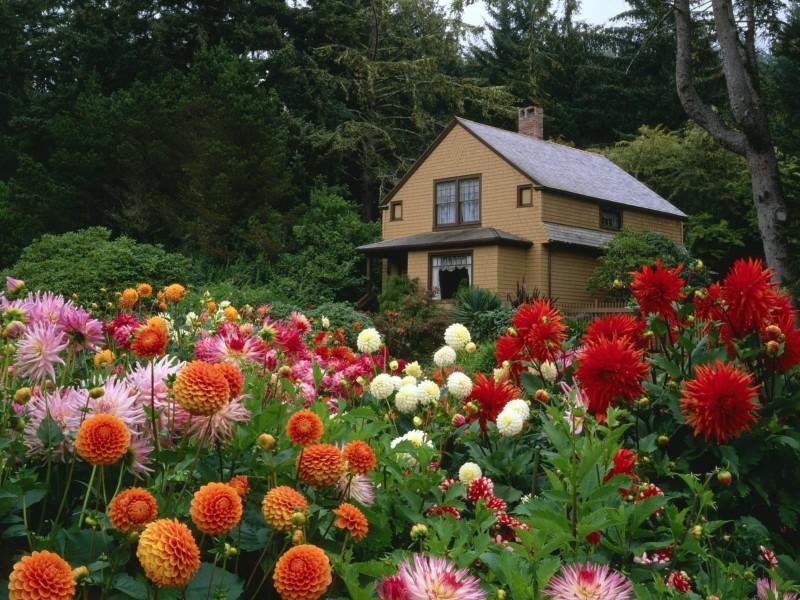 Rompecabezas Recoger rompecabezas en línea - Flowers at house