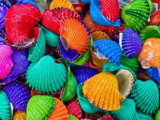 Собирать пазл Colored shells онлайн