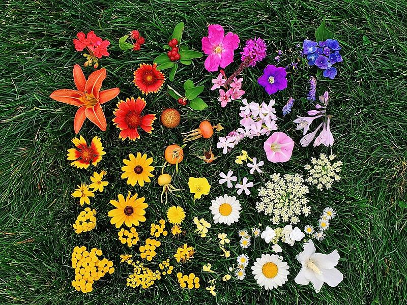Rompecabezas Recoger rompecabezas en línea - Flower scale