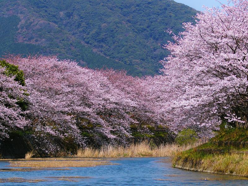 Rompecabezas Recoger rompecabezas en línea - vesna v Yaponii