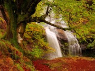 Собирать пазл Waterfall in Autumn Forest онлайн