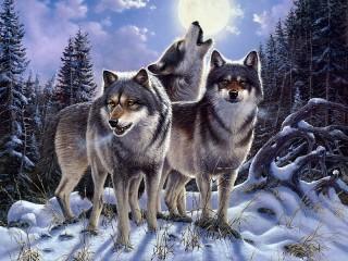 Собирать пазл Wolf call онлайн
