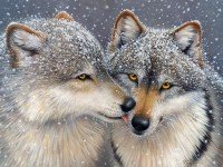 Собирать пазл Wolf tenderness онлайн