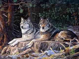 Собирать пазл The wolves are on vacation онлайн