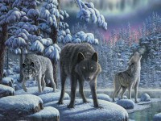 Собирать пазл Wolves in the woods онлайн