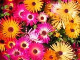 Собирать пазл Bright petals онлайн