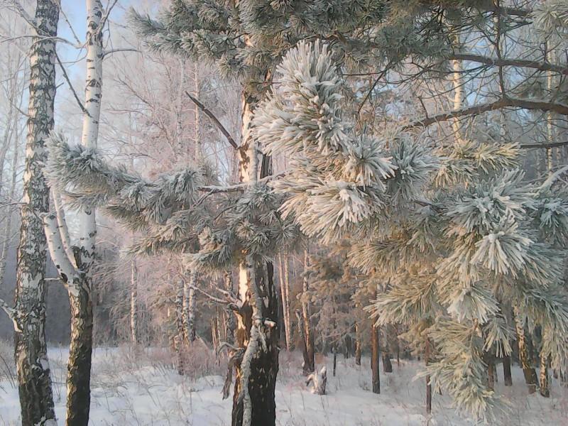 Rompecabezas Recoger rompecabezas en línea - Winter charm